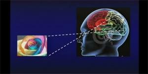 La plasticità del cervello