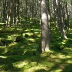 foreste1