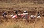 Progetto di sviluppo rurale della valle della Bekaa