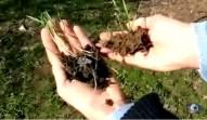 Una soluzione sostenibile per agricoltura e ambiente
