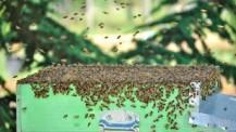 Arnia con api