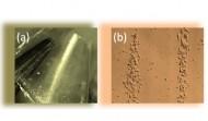 Una pellicola elettrizzante per manipolare le cellule