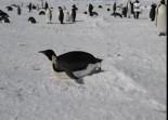 Antartide: la ricerca italiana nell'area marina del mare di ross