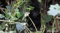 Rischio estinzione per il 60% dei primati