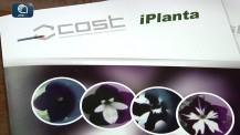 Cost iPLANTA