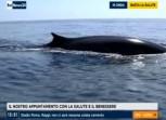La strage di balene