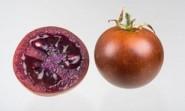 """Le infiammazioni intestinali croniche si curano con il pomodoro """"bronzeo"""""""
