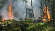 Prevedere gli incendi boschivi