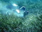 Spiagge a rischio per l'aumento del CO2