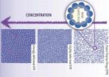 Anelli elastici come nuovo modello di materia soffice