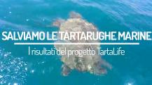 Tartalife in aiuto delle tartarughe marine