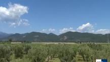 Studiare gli ulivi all'aperto